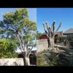 K T Tree Services